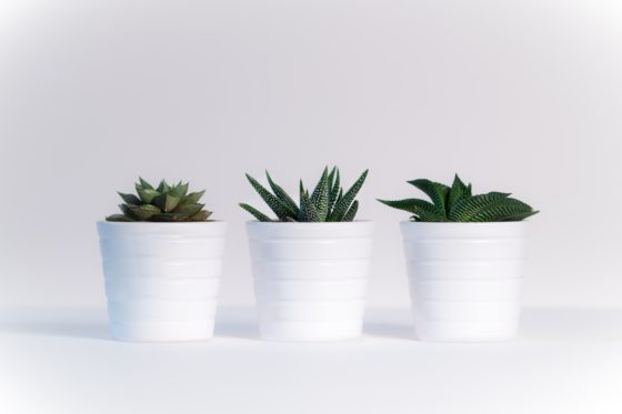 Plants For Hire Melbourne