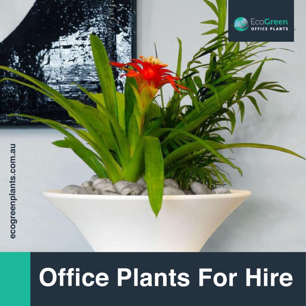 plant hire melbourne