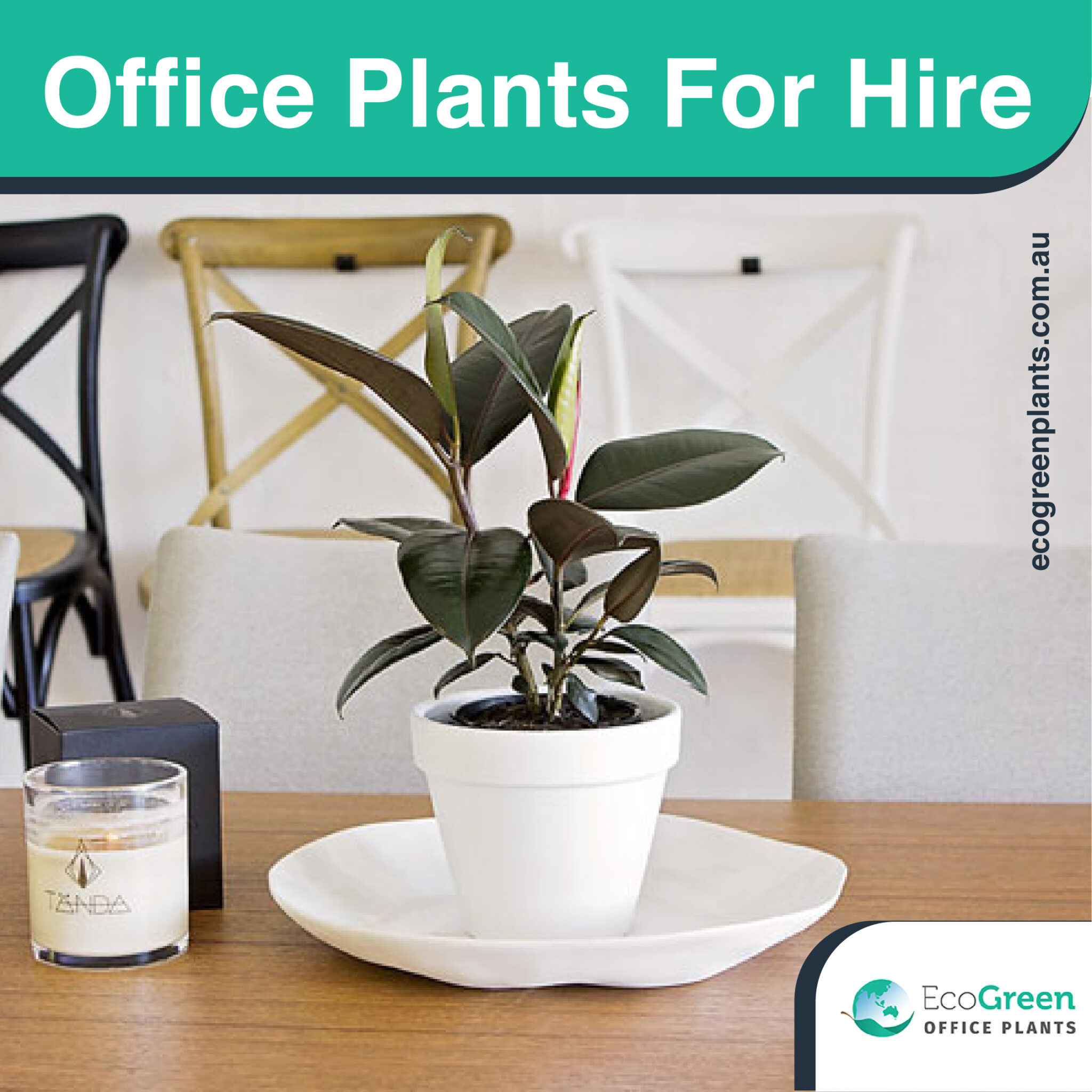 plant hire in Melbourne Office
