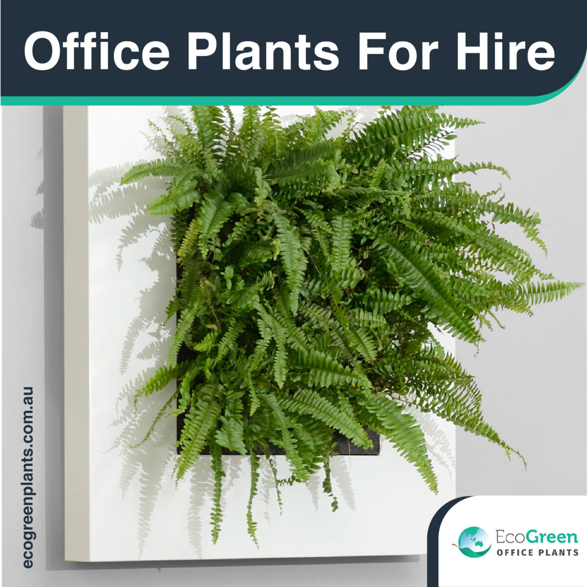 Melbourne plants for hire
