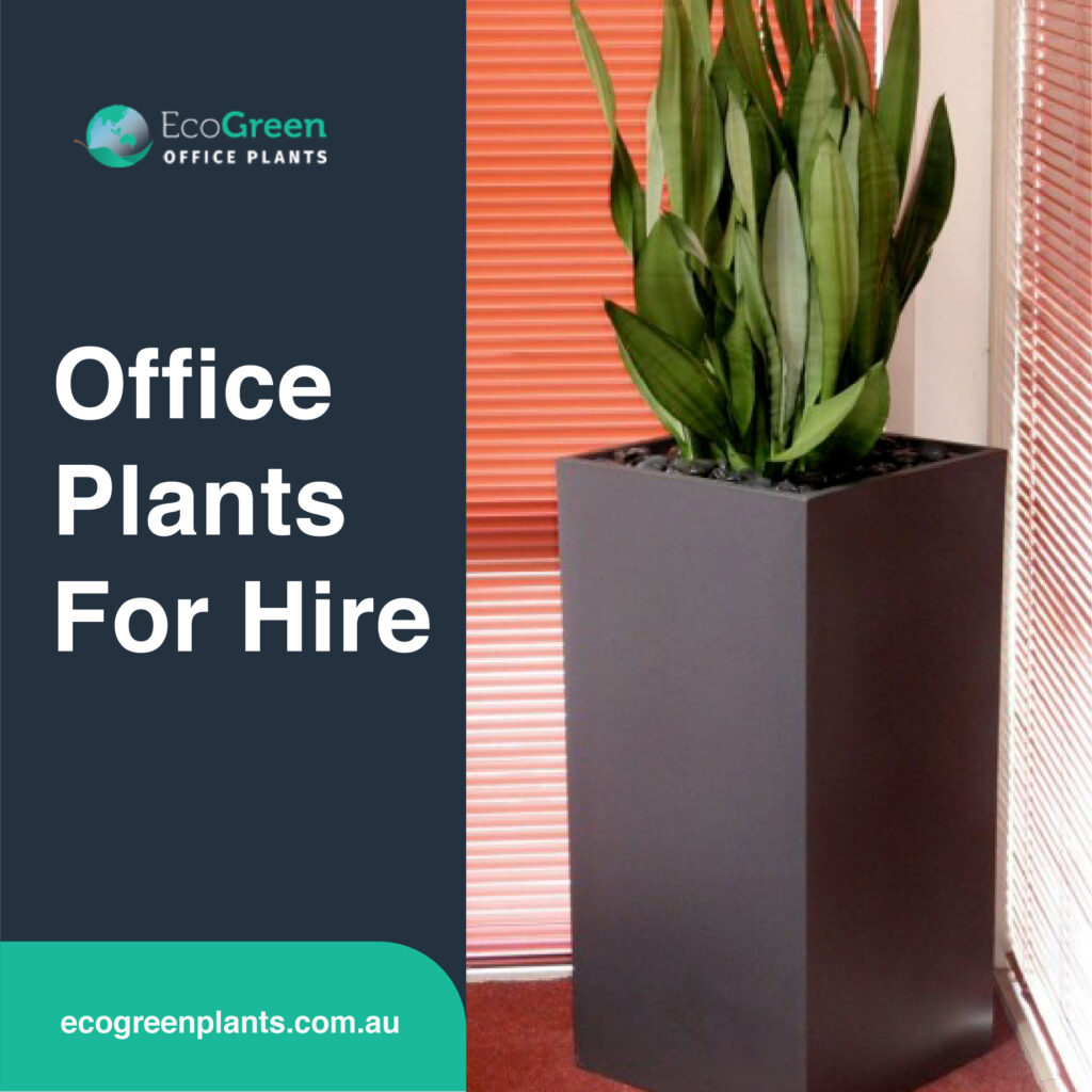 plant for hire outdoor
