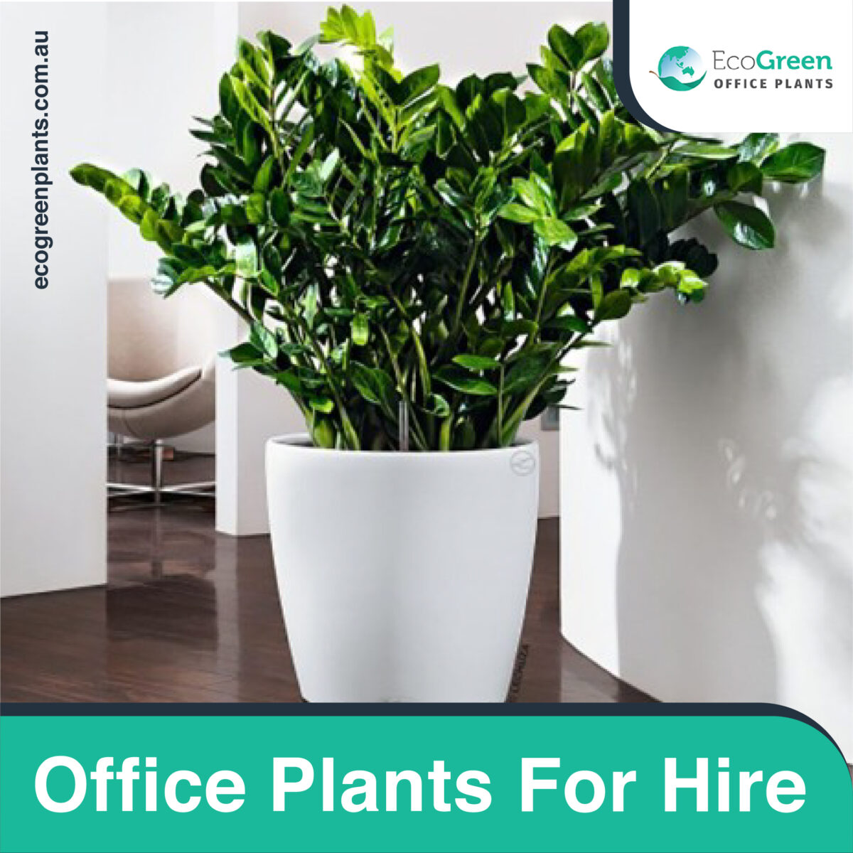 hire wedding plant