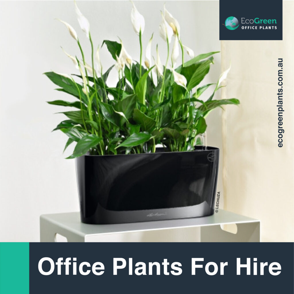 outdoor plant for hire