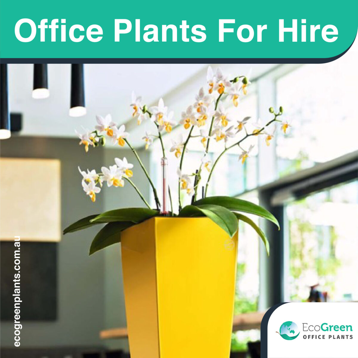 hire Office plant