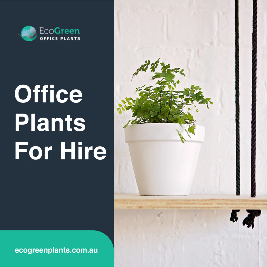hire indoor plant