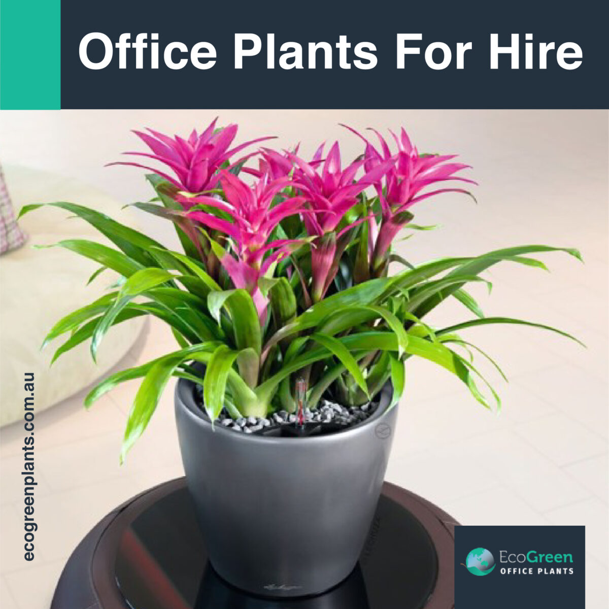 hire in Melbourne office plant